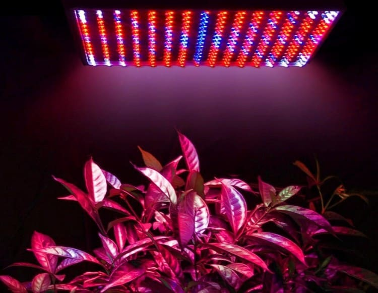 Most Important 8 Tips to Set up Successful Planting with LED Lights