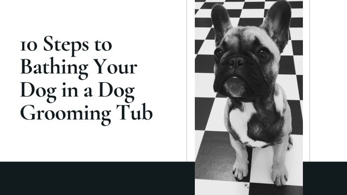 10 Steps to Bathing Your Dog in a Dog Grooming Tub