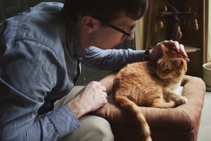 5 Advantages to Take Your Pet to A Vet Neurologist