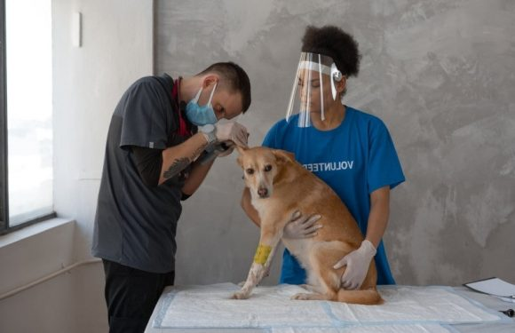 What should I Look for When Finding a Veterinarian?