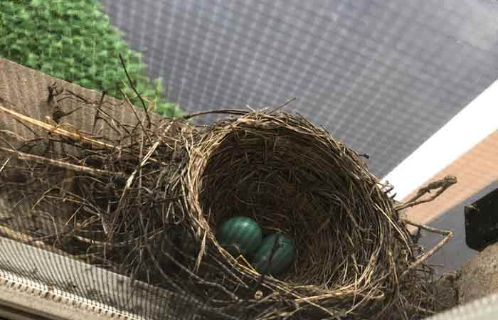 Got Birds? Helpful Tips for Keeping Birds from Nesting in Your Gutters